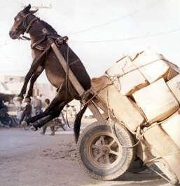 overload_donkey_cart
